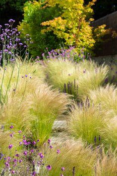 Pennisetum villosum wolliges federborstengras sommer for Pflanzengestaltung garten