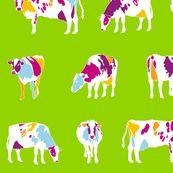 colour cows