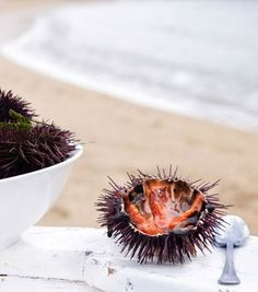 The world's freshest sea urchin, or uni, is arguably found in Hokkaido, the northernmost of Japan's four main islands.