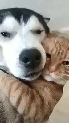 cutecat,lovelycats-This is my dog and cat kitty+lola they hug but they also fight when one of them does not get food. Cute Funny Animals, Cute Baby Animals, Funny Dogs, Animals And Pets, Cute Cats, Cute Dogs And Cats, Cute Animal Videos, Funny Animal Pictures, Tier Fotos