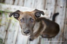 © Brindleberry Pet Photo