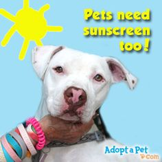 pets-sunscreen
