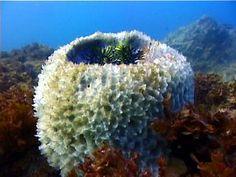 deep sea sponges - Google Search