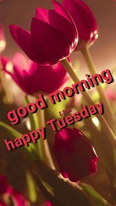 Good Morning Tuesday, Happy Tuesday, Birthday Wishes Flowers, Good Morning Flowers Gif, Good Morning Messages, Allah, Breathe, Handbags, Purses