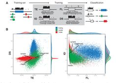 Large-scale genomics and computational approaches have identified thousands of putative long non-coding RNAs (lncRNAs). It has been controversial, however, as to what fraction of these RNAs is truly non-coding. Here, researchers from Harvard University and MIT combined ribosome profiling with a machine-learning approach to validate lncRNAs during zebrafish development in a high throughput manner. They found that dozens of proposed lncRNAs are protein-coding contaminants and that many lncRNAs…