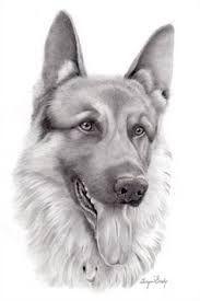 Resultado de imagen para dibujos realistas de perros
