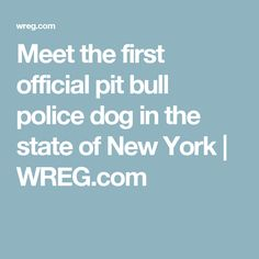 Meet the first official pit bull police dog in the state of New York | WREG.com