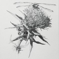 "Saatchi Art is pleased to offer the drawing, ""Thistle and Dragonfly,"" by Yana Lu, available for purchase at $240 USD. Original Drawing: Ink on Paper. Size is 5.1 H x 5.1 W x 0 in. Floral Drawing, Art Floral, Dragonfly Drawing, Stippling Art, Pointillism, Photorealism, Floral Illustrations, White Art, Botanical Art"