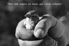 "Today's #Spanish #Idiom reminds us to take oportunities as they come, instead of wondering what could have happened if...  It goes like this:  ""Mas vale pájaro en mano que ciento volando""  (A bird in hand is worth more than a hundred flying - Equivalent to the #English expression: a bird in hand is worth two in the bush)."