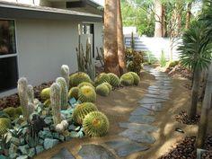 cacti garden / xeriscape