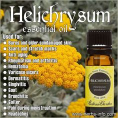 Immortelle essential oil, which is scientifically known as Helichrysum italicum, is one of the rarest and costliest among essential oils. It has multiple health Essential Oil Carrier Oils, Doterra Oils, Doterra Essential Oils, Young Living Essential Oils, Essential Oil Blends, Helichrysum Essential Oil Uses, Helichrysum Oil, Healing Oils, Healing Herbs