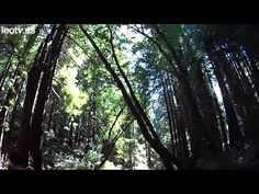 San Francisco is rich in spectacles - take a virtual tour right now! (picture: 0302 Muir Woods00 Main Trail)