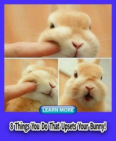 Rabbit Bunny Make, Cage, Indoor, Toys, Photography, House, DIY, Accessories, Names,  Outdoor, Food, Room, Supplies, Apartment, Bonding, Clothes, Cute, Rabbit Behavior, Small Kittens, House Rabbit, Outdoor Food, Guide Dog, Budgies, Toys Photography, Diy Accessories, Guinea Pigs