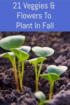 Herb Garden Design, Vegetable Garden, Fall Plants, Garden Plants, Fall Vegetables, Veggies, Container Gardening, Gardening Tips, Allotment Gardening