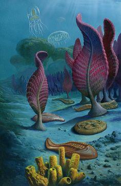 Organisms of the Ediacaran by Christian Jégou