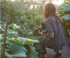 What Are the Best Plants for Your Fall Vegetable Garden A Well Traveled Woman, The Secret Garden, Farm Gardens, Gardening For Beginners, Gardening Tips, Farm Life, Country Life, Life Is Good, Garden Design