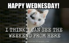 Happy Wednesday Morning Quotes with Beautiful Wednesday images The best collection of Wednesday Morning Quotes you can send to someone you cherish, with Good Morning Wednesday Images. Funny Wednesday Quotes, Wednesday Morning Quotes, Wednesday Morning Greetings, Wednesday Humor, Good Morning Quotes, Wednesday Hump Day, Monday Humor Quotes, Morning Sayings, Morning Images