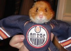 Rhino wears his team jersey with pride! - Chrystal Fussell