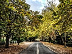 Mount Wilson. NSW Australia.