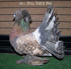 Opal Hen