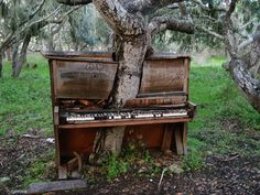 USSR abandoned places in decay - A tree growing through an abandoned piano. This is sad. Whi would abandon such a beautiful piano.n now look how the poor tree has to grow! Abandoned Mansions, Abandoned Buildings, Abandoned Places, Haunted Places, Derelict Places, Spooky Places, Haunted Houses, Vieux Pianos, Top Photos