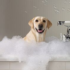 Everything is better with Dog's hair.: Homemade Dog Shampoo