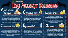 The home remedies for dog allergies consist of some natural remedies which reduce the infection and skin inflammation. The steps to use home remedies are very simple and after application your dog will get quick relief from the infection. www.1800remedies.com