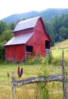 Red Barn, Rooster On Fence   ..rh