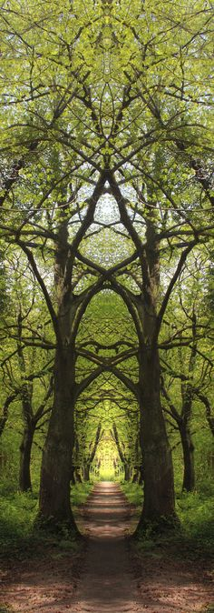 Druids Trees: #Trees cathedral.