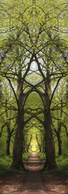Un bosque tan tranquilo como los arboles que te dejan pensar y respirar libremente que te despejan el mundo que llevas dentro