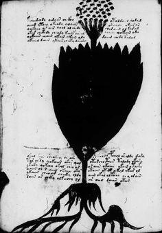 Voynich manuscript picture