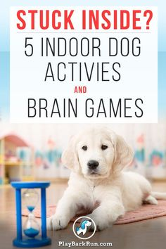Stuck indoors? Learn how to tire out your dog mentally and physically with fun challenges and games. Therapy Dog Training, Best Dog Training, Therapy Dogs, Training Tips, Excited Dog, Hyper Dog, Clever Dog, Dog Games, Dog Activities
