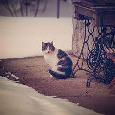 Payo on the snow :) facebook.com/catsmagazine #cat