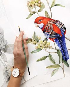 Watercolor Bird, Watercolor Animals, Watercolor Illustration, Watercolor Paintings For Beginners, Botanical Drawings, Bird Drawings, Animal Paintings, Bird Art, Artwork