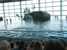 Audiences thrill to a performance by trained dolphins at Shedd's Oceanarium.