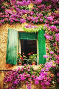 Window With Green Open Shutters Surrounded by Blooming Flowers, Lombardy, Italy