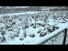 Debi News - Nieve en Japón 2013 . Aqui estoy! Hoy he decidido hacer un video tipo news a lo cutre xD.    Espero que os guste y que disfruteis de la nieve!