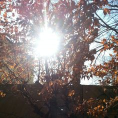#photography#tree#sun