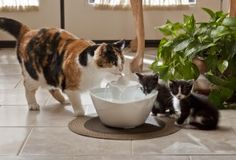 Win a Drinkwell Lotus Fountain from The Conscious Cat