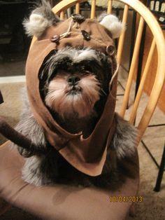 ewok dog costume shih tzu - Google Search
