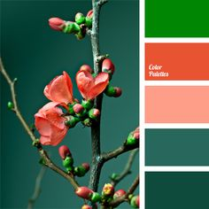 Coral, Rust, & 3 Shades of Green