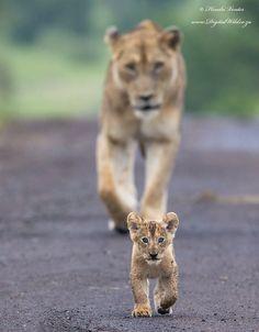 leeuw en cup
