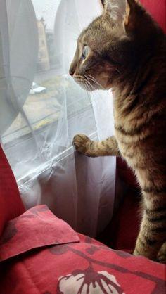 Mirando por la ventana... cada mañana observa los autos pasar y los animales fuera del departamento, le encanta!!