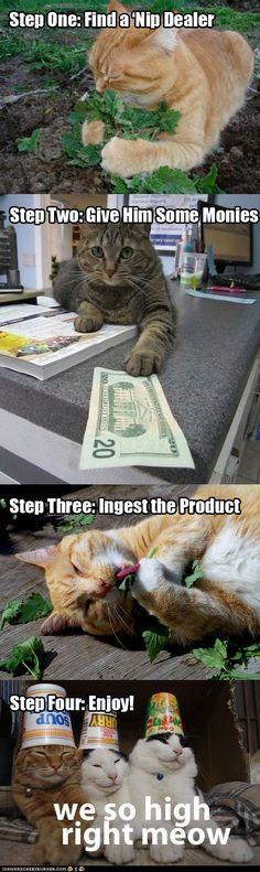 Hahahhaha #cats FTW! #kitten