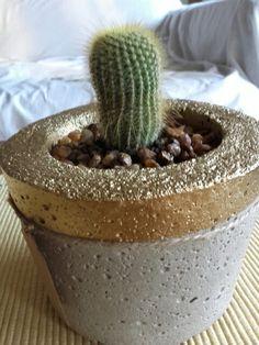 Notocactus con dorado.