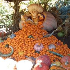 Haunted Pumpkin Garden : New York Botanical Garden - Bronx, NY, United States