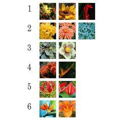 Zyla's Autumn Nature Images: 1) Spicy Autumn, 2) Mellow Autumn, 3) Gamine Autumn, 4) Copper Autumn, 5) Bronze Autumn, 6) High Autumn.