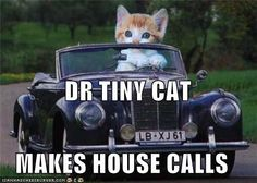 Dr. Tiny Cat..