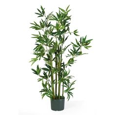 Wholesale 4 Ft Bamboo Silk Plant, [Decor, Silk Flowers] -- Read more at the image link. Silk Plants, Bamboo Plants, Fake Plants, Artificial Plants, Indoor Bamboo, Bamboo Garden, Plants Indoor, Bamboo Leaves, Bamboo Tree