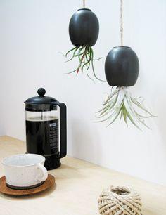 Hanging_air_plant_pod